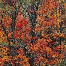 Осень, перья, бахрома