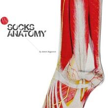 Анатомия носок