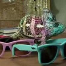 Хамелеон и очки