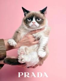 Угрюмый кот вошел в модную индустрию